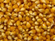 yellow_popping_kernels_seeds
